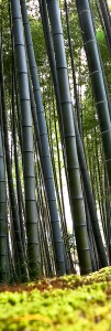 ambience-bamboo
