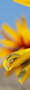 ambience-flower