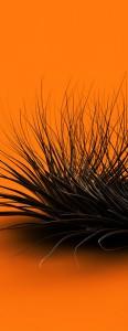 orangeChaos
